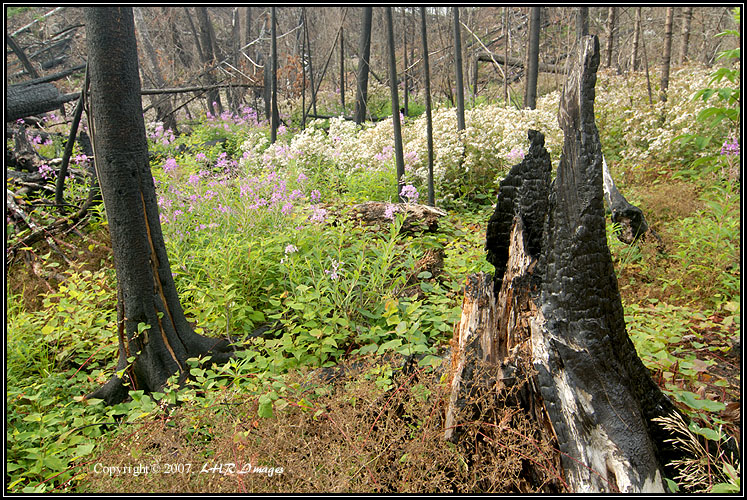 Fire Aftermath along the Portage Trail